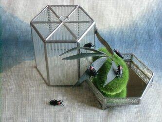ガラスの虫籠(ホタル) - 弐の画像