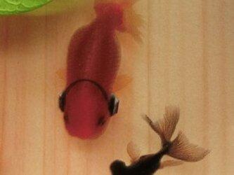 樹脂金魚 金魚アート 「楽」 純日本製 プレゼント 誕生日 結婚 退職 還暦 祝い 男性 女性 クリスマスの画像