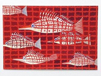 ポストカード4枚セット㉝「クダゴンベ」の画像
