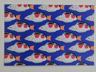 ポストカード4枚セット㉜「かんむりべら幼魚」の画像