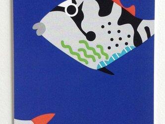 ポストカード4枚セット㉑「きへりもんがら幼魚」の画像