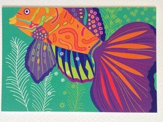 ポストカード4枚セット⑭「テグリ!サンバ!」の画像