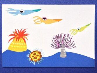 ポストカード4枚セット⑬「イカ」の画像