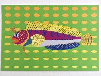 ポストカード4枚セット④「ギンポ」の画像