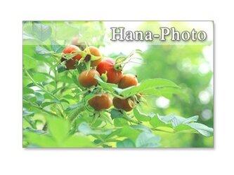 1246)緑のある花の風景    ポストカード5枚組の画像