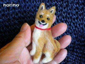 羊毛フェルト 柴犬ブローチの画像