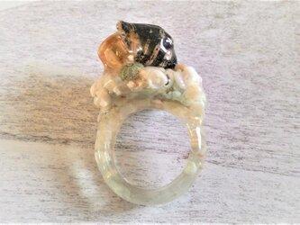 ヤドカリと極小ウニの標本指輪の画像
