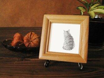 猫 たそがれる猫・・銀トラ編の画像