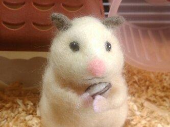 羊毛ハムスター*キンクマ*たっちの画像