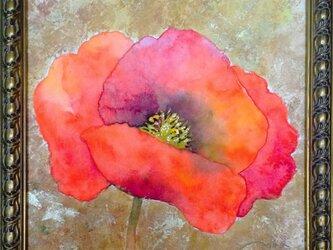 poppyの画像