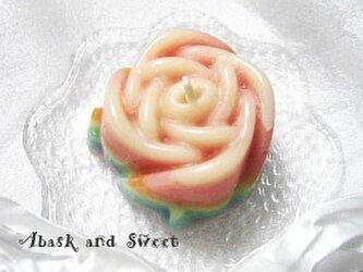 rainbow roseの画像