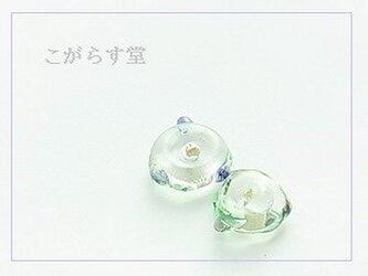 貝のかけら/蛍色 ×2の画像