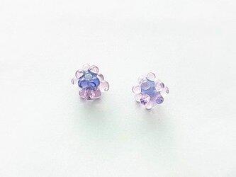 こんぺ/藤紫 ×2の画像