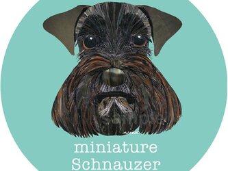 ミニチュア・シュナウザー黒2《犬種名ステッカー/小型犬》の画像