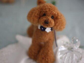 羊毛フェルト お洒落でしょう レッドカラーのトイプードルの画像
