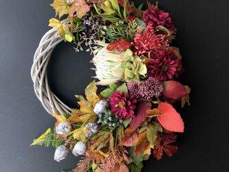 "Autumn wreath "" Protea ""の画像"