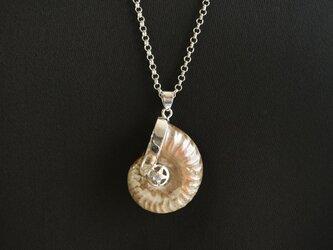 アンモナイトのペンダント シルバーカラー 化石  ネックレスの画像
