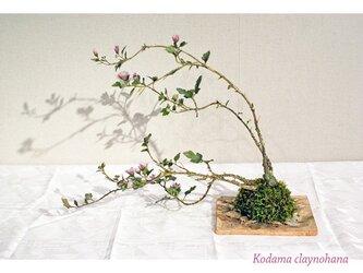 菊盆の画像