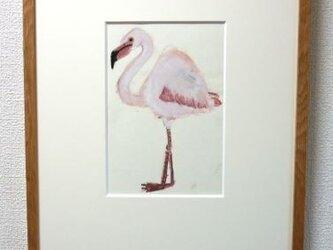 フラミンゴの画像