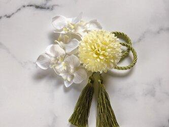 ピンポンマム 胡蝶蘭 セット タッセル付きの画像
