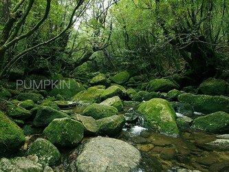 白谷の渓流  PH-A4-083   屋久島 白谷雲水峡 渓流 清流 世界遺産の画像
