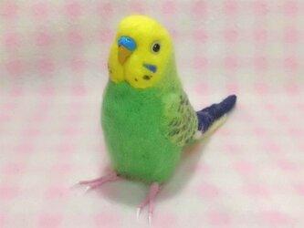 リアルサイズ♪ セキセイインコ 牧場色グリーンオパ-リン 羊毛フェルト ☆選べる鼻の色の画像