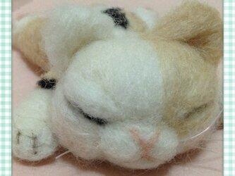 ふてぶてしい寝顔の三毛にゃんの画像