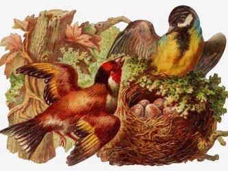 封筒付きグリーティングカード 鳥たち DA-ADG006の画像