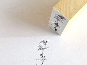 ラバースタンプ 月見草の画像