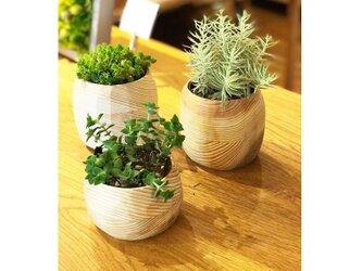 ずんぐり~ウッド鉢(カバー) 自然木無垢材(八溝杉)削り出し品の画像