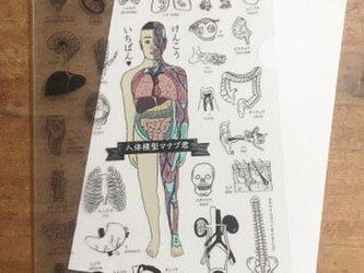 人体模型マナブくん A4クリアファイルの画像
