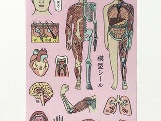 人体模型マナブくんシールの画像