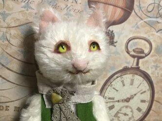 白猫くんの画像