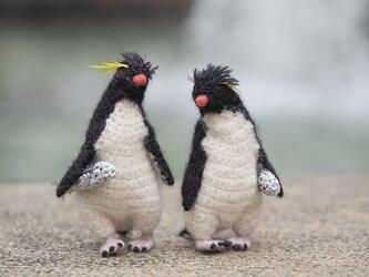 やぶにらみのイワトビペンギンの画像