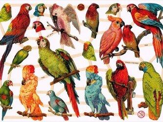 ドイツ製クロモス カラフルな鳥たち ラメなし DA-CHY042(Made in Germany)の画像