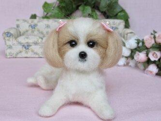 可愛いシーズー 犬 の画像