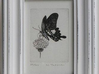 蝶とアザミ / 銅版画 (額あり)の画像