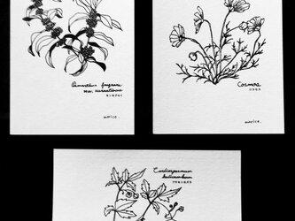 長月の花の画像