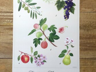 Fruits & Flowers Posterの画像