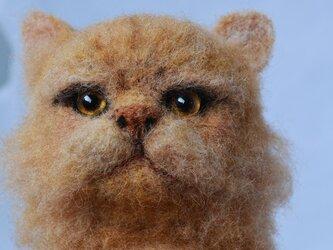 ペルシャ猫の画像