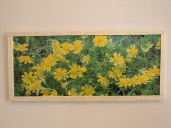 yellow flower 2の画像