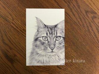 ねこポストカード② / brown tabby cat 2枚組の画像
