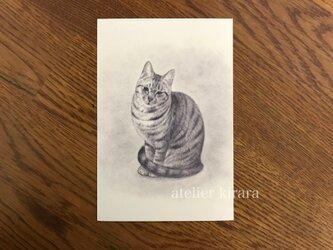 ねこポストカード④ / ももちゃん 2枚組の画像