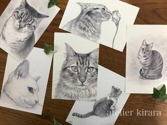 ねこポストカード 6枚組の画像