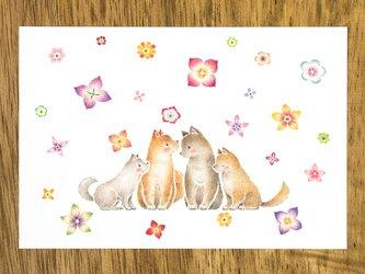 """4枚セット。絵本のような。ポストカード """"犬の家族と花ふる日"""" PC-313の画像"""