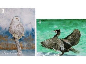 ポストカード「3・森のフクロウ」「4・鵜」の画像
