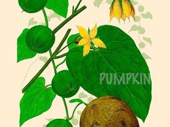 ハーブダイアリー B-A4-08 ボタニカルアート イラスト 羅漢果 植物画 漢方 薬草の画像