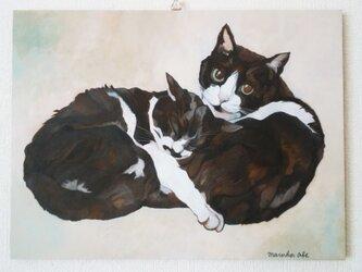 よりそい猫(ウメとハッチ)の画像