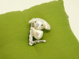 白いコアラのマーチの画像