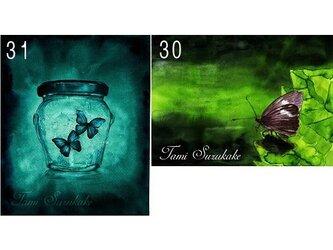 ポストカード「30・水辺の蝶」「31・ガラス瓶の中の蝶」の画像